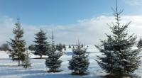 Przeszedłem się dzisiaj po polu z aparatem, bo słońce pięknie świeciło i świeży śnieg świetnie wyglądał w zestawieniu z niebieskim niebem.